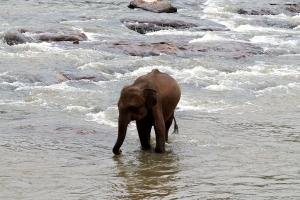 Lanka elephant orphanage