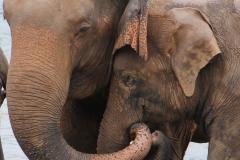 Sri Lanka Elephant Orphanage Hari Varma Photos